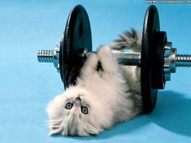 A proteína é fundamental para obter sucesso no resultado da musculação